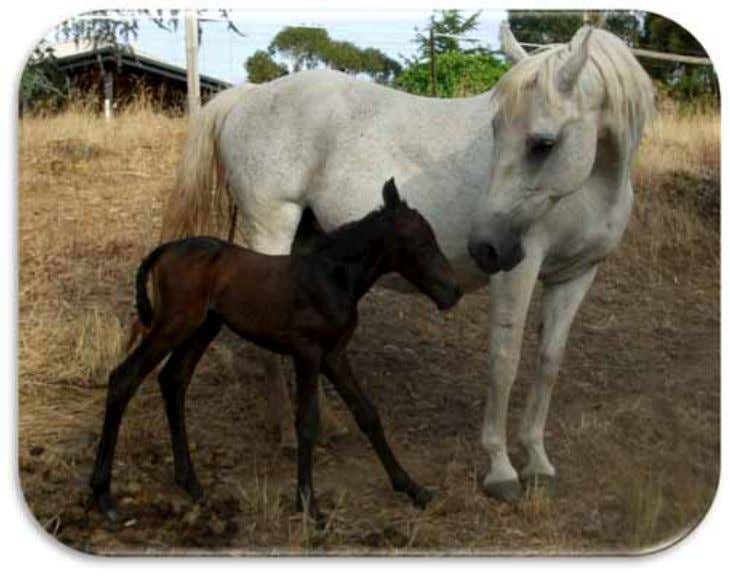 FOAL BOASTER PICS – Dean Morgan's foals Above: 103 Lili with her filly foal aged four