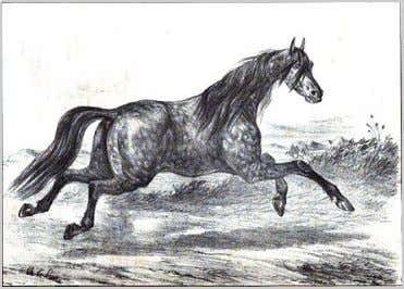 "as in various sport disciplines and a halter class. History 1848 French image of a ""Turkmene"""