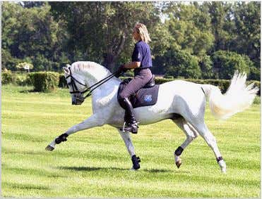 Normally all horses competing here are Akhal-Teke horses. Akhal-Teke under saddle Uses The Akhal-Teke, due to