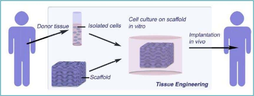 The scaffold (Membrane Structure) should be highly porous with good pore connectivity to ensure sufficient nutrient