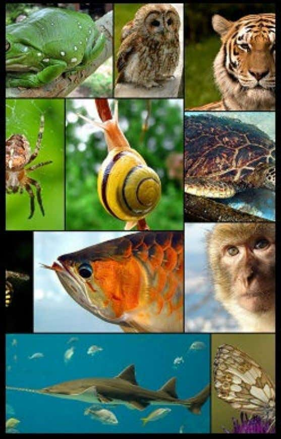Lesson (1) Origin of living organisms and mechanisms of their evolution