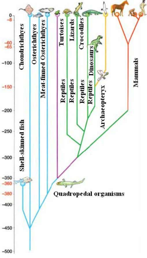 It describes the relation between different species and groups of living organisms Fig. (16) Evolution tree