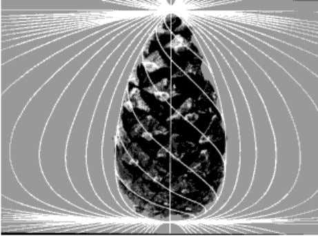 a pine cone, as produced by Lawrence Edwards (Reference 2): Figure 26 The profile is clearly