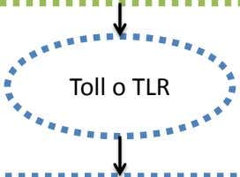 Toll o TLR