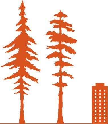 Photo: Phil Schermeister How would it measure up to a coast redwood tree? The coast redwood
