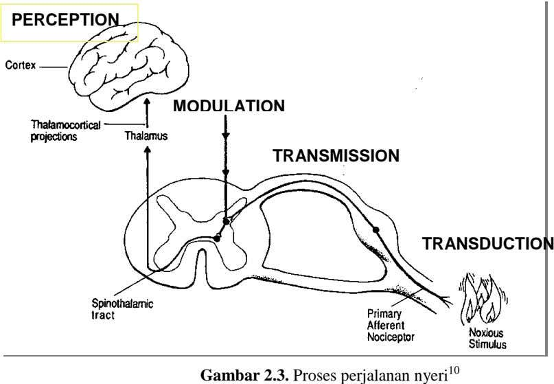 PERCEPTION MODULATION TRANSMISSION TRANSDUCTION Gambar 2.3. Proses perjalanan nyeri 10