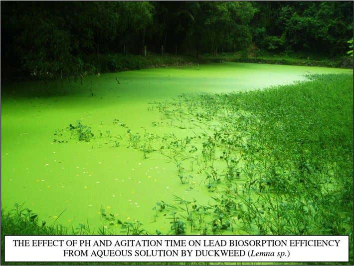 THE EFFECT OF PH AND AGITATION TIME ON LEAD BIOSORPTION EFFICIENCY FROM AQUEOUS SOLUTION BY