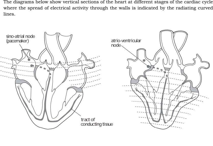 The diagrams below show vertical sections of the heart at different stages of the cardiac