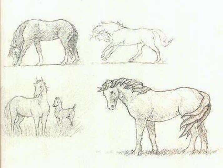 I suggest that you draw many horses in many different poses to get a feel