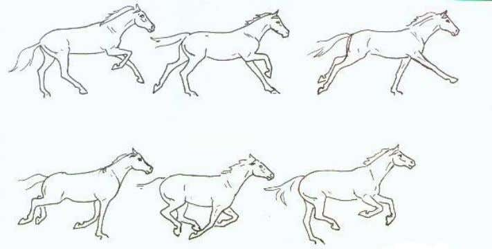 THE GALLOP -- GIDDY-UP!! Horses also have a wide variety of other movements. Horses rear,