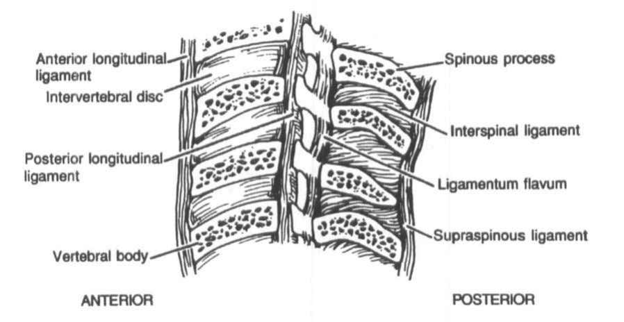 "spine than in the lower cervical spine."">' Figure 4. Lateral view of the cervical spine demonstrating"