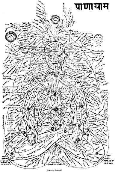 the enteric (gastrointestinal) nervous system. The Chakras No other aspects of the energetic system are as