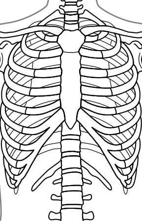 floating ribs, and do not connect to the sternum at all. The ribs do not have