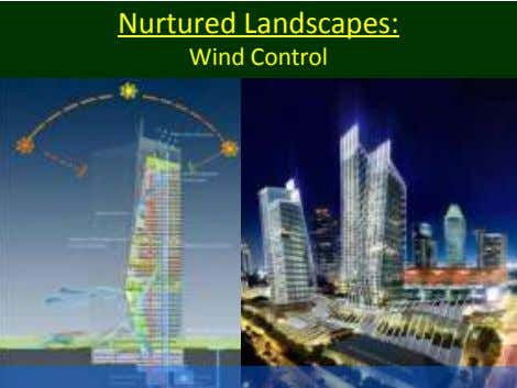Nurtured Landscapes: Wind Control