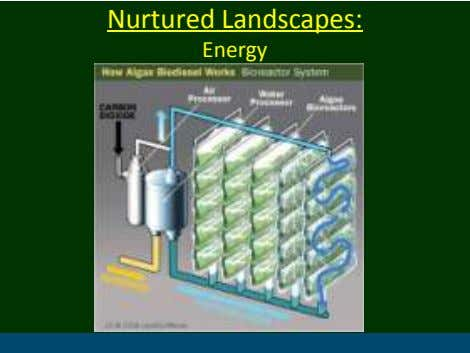 Nurtured Landscapes: Energy
