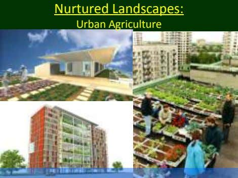 Nurtured Landscapes: Urban Agriculture