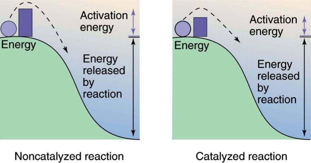 Chapter 3 Biological Energy Transformation Enzymes Catalyze Reactions Enzymes lower the energy of activation Copyright ©2009