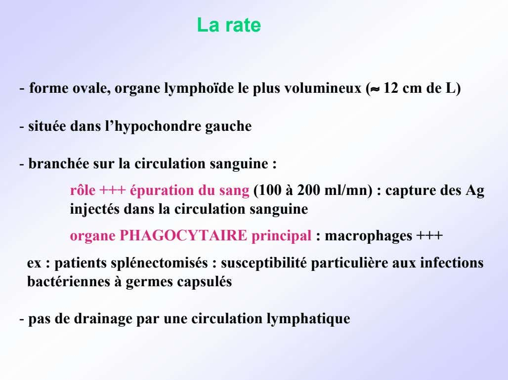La rate - forme ovale, organe lymphoïde le plus volumineux (≈ 12 cm de L)
