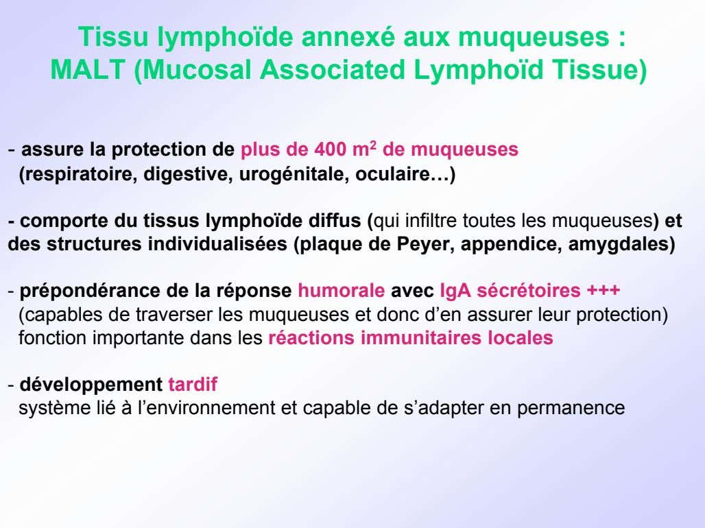 Tissu lymphoïde annexé aux muqueuses : MALT (Mucosal Associated Lymphoïd Tissue) - assure la protection