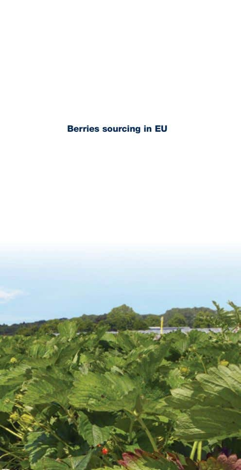 Berries sourcing in EU