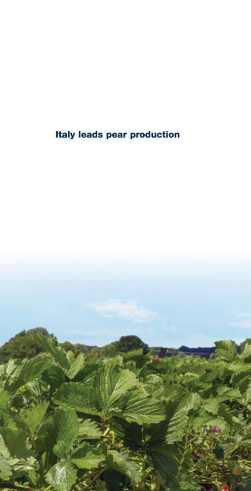 Italy leads pear production