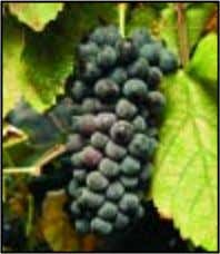 reservations early, this event will sell out! ANSWERS FROM PAGE 12: Grenache Syrah 2 0 www.winecountrythisweek.com