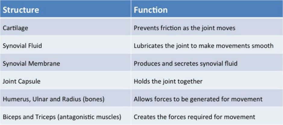 include the following parts with their correct functions: Comparing the movement of different joints The hip