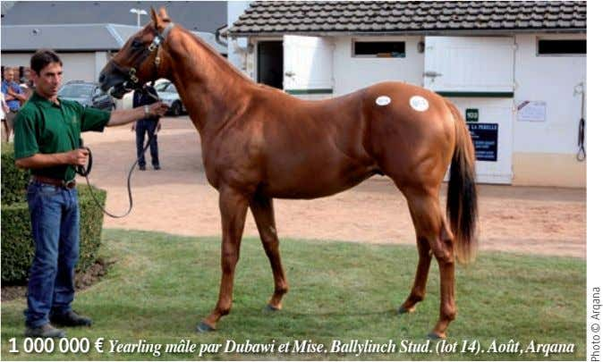 1 000 000 € Yearling mâle par Dubawi et Mise. Ballylinch Stud. (lot 14). Août,