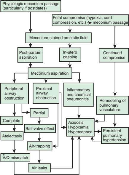 Physiologic meconium passage (particularly if postdates) Fetal compromise (hypoxia, cord compression, etc.) meconium