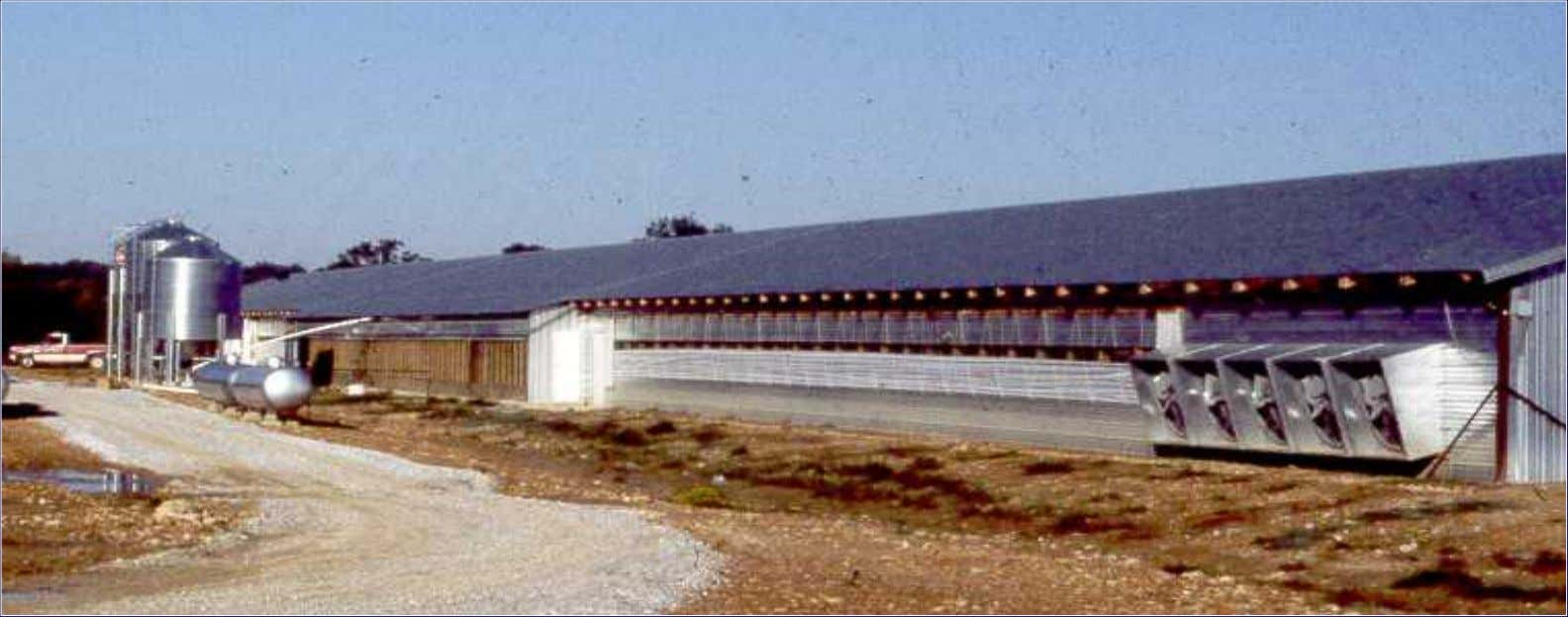 Barn Barn with with Tunnel Tunnel Ventilation Ventilation and and Evaporative Evaporative Cooling Cooling Pads Pads