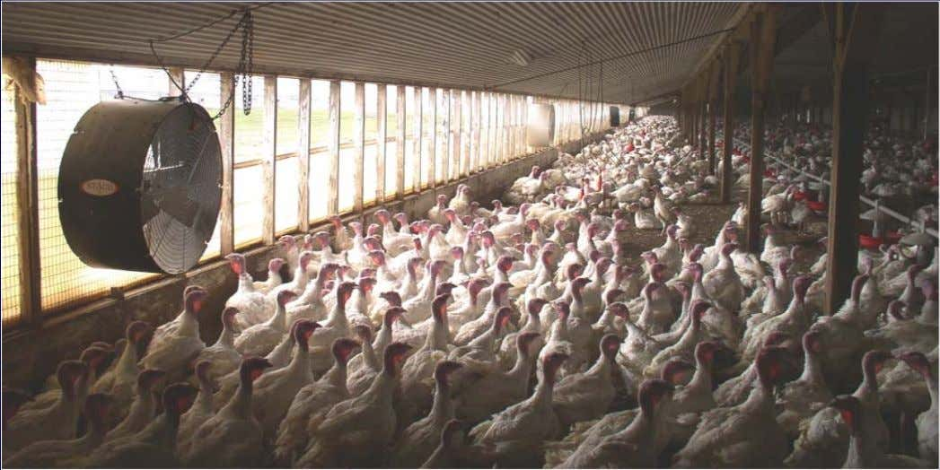 - 15,000 birds • New or build-up litter • Growth period: 12 wk (hen) – 20