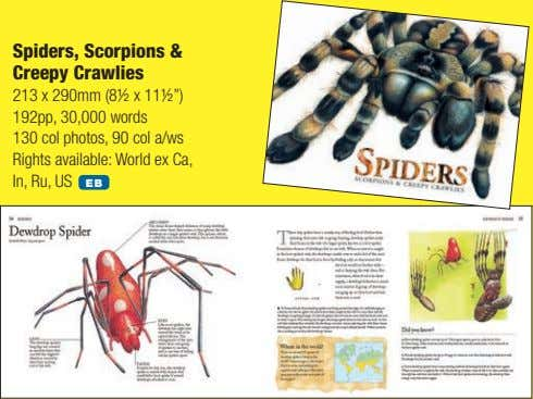 "Spiders, Scorpions & Creepy Crawlies 213 x 290mm (8½ x 11½"") 192pp, 30,000 words 130"