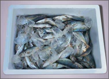 periodically up to 10 days. The results of the experiments indicated that the combination Fresh Fish
