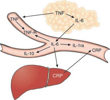exercise. The level of circulating IL-6 increases in an Fig. 1. Chronic low-grade systemic inflammation. The