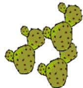 6. Irregular plurals child – children cactus – cacti louse - lice mouse - mice woman