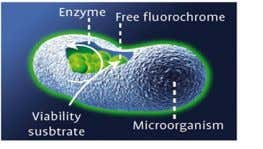produce fluorescence Fluorescence is detected by ScanRDI Filter, Label, Scan Specific Cell Labeling The