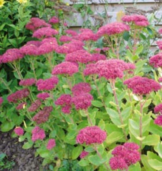 AUTUmN DELIGHTS IN OCTObER Gardening by Janet Heath AUTUMN is well underway and your garden