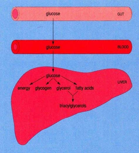 Fig: Interrelationship of food Carbohydrate containing foods such as starch are digested to glucose, which is