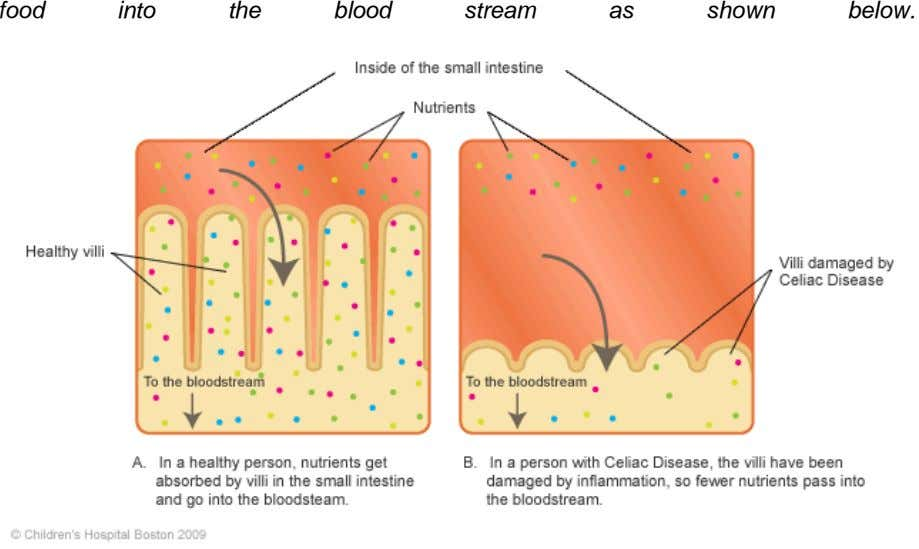 food into the blood stream as shown below.