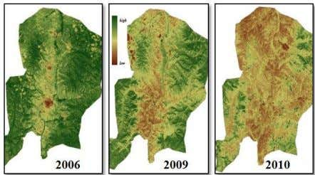15-17) Figure 14. True color combination of Bornuur sum Figure 15. Vegetation map NDVI of Bornuur
