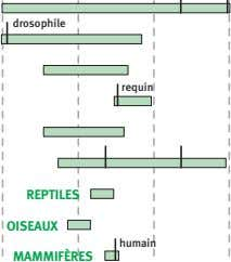 drosophile requin grenouille REPTILES OISEAUX humain MAMMIFÈRES