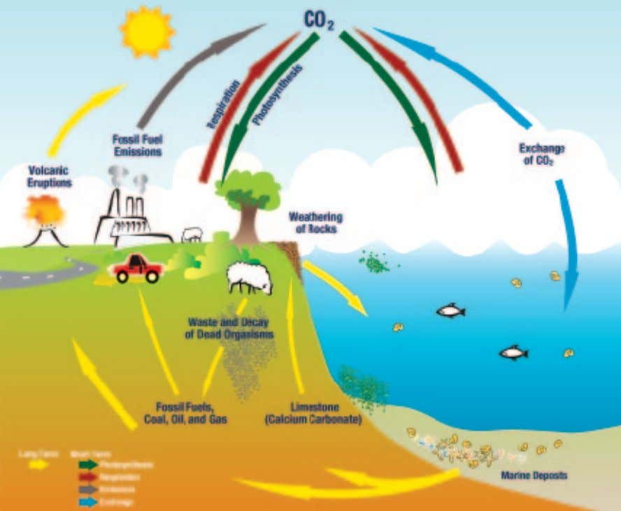 FIGURE 4 The Carbon Cycle Carbon is continually exchanged between the atmosphere, ocean, biosphere, and