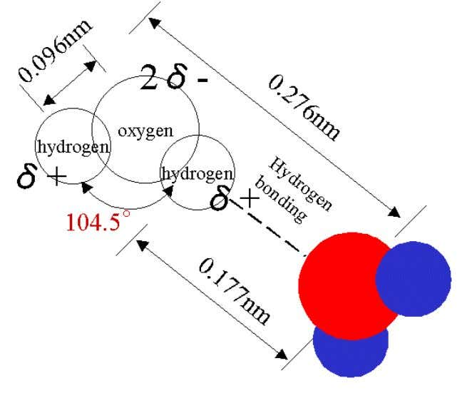 Figure 2.1 : Shape of the water molecule (from http://www.lsbu.ac.uk/water ) Other examples of the