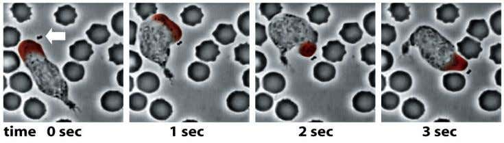 Figure 16-4 Molecular Biology of the Cell (© Garland Science 2008)