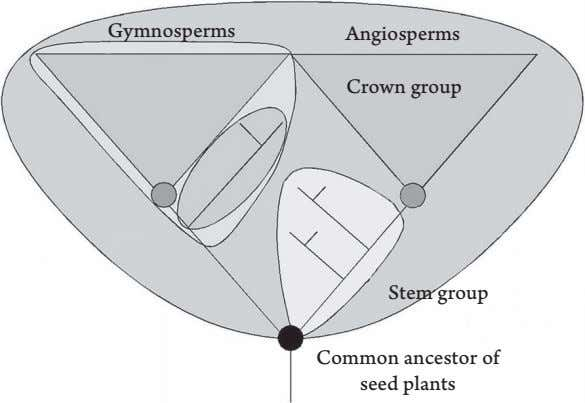 Gymnosperms Angiosperms Crown group Stem group Common ancestor of seed plants