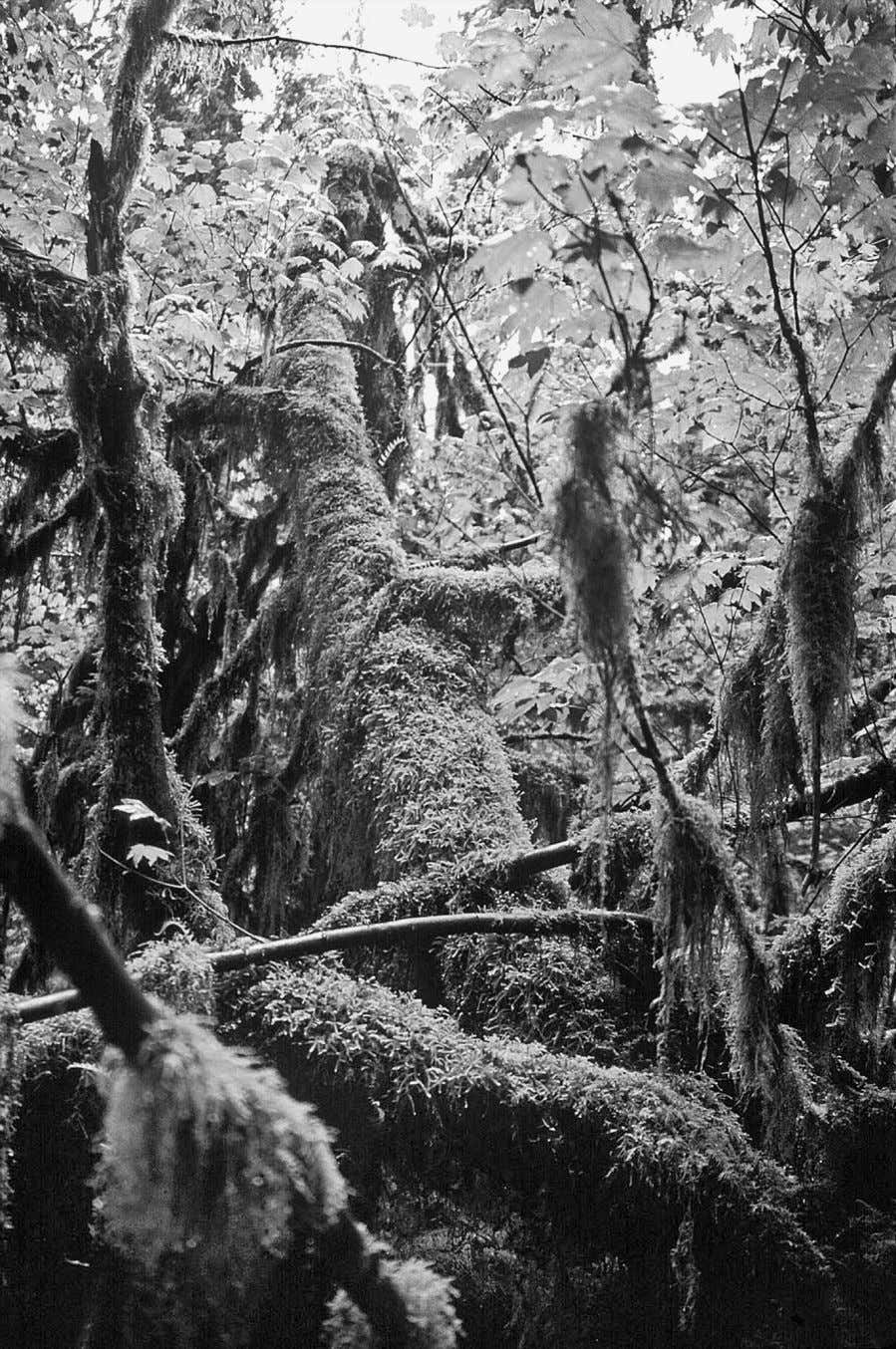 Figure 3.1 Damp habitats such as this temperate rain forest in the Hoh River Valley,
