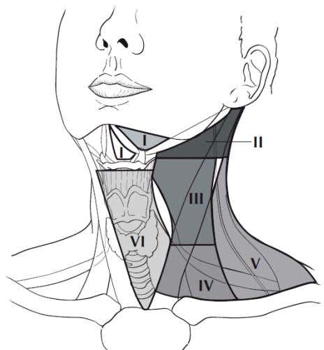 e r a t u r e Chapter 1: Anatomy of the Oral Cavity Figure 10: