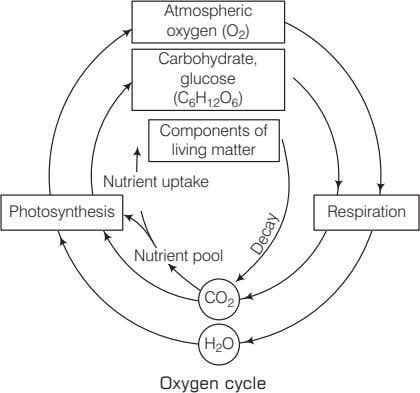 Atmospheric oxygen (O ) 2 Carbohydrate, glucose (C H O ) 6 12 6 Components