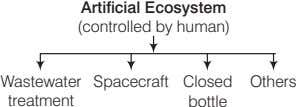 Artificial Ecosystem (controlled by human) Wastewater Spacecraft Closed Others treatment bottle