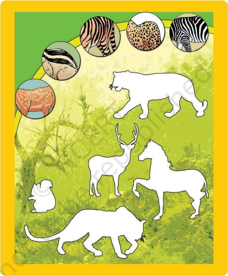 correct pattern of the skin on the picture of each animal. The different patterns on the